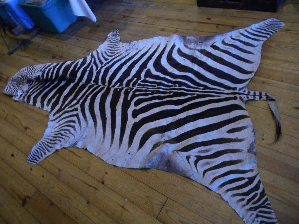 86: Zebra hide rug