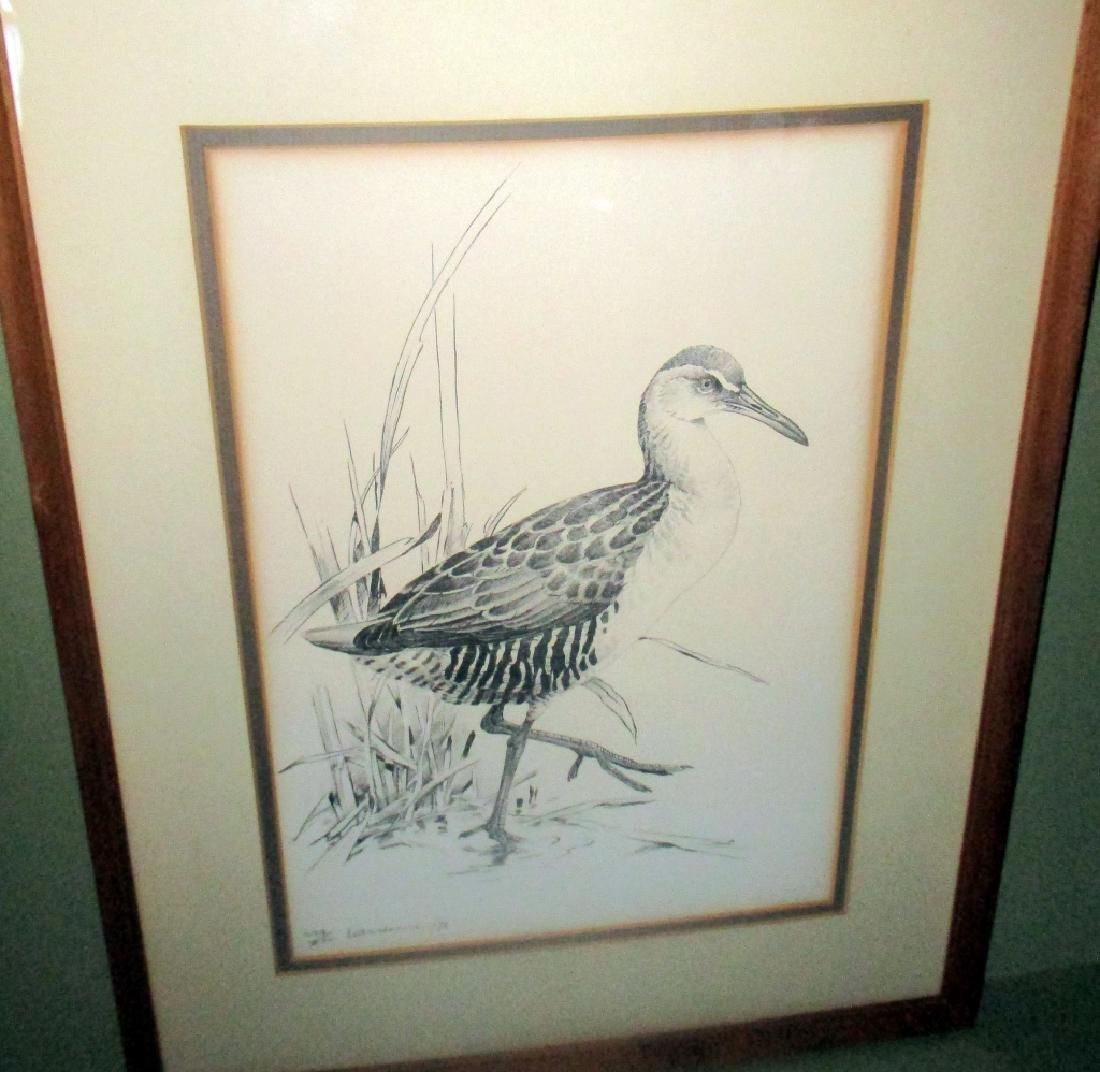 Etching of a Shore Bird
