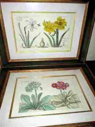 Two Custom Framed Botanical Prints