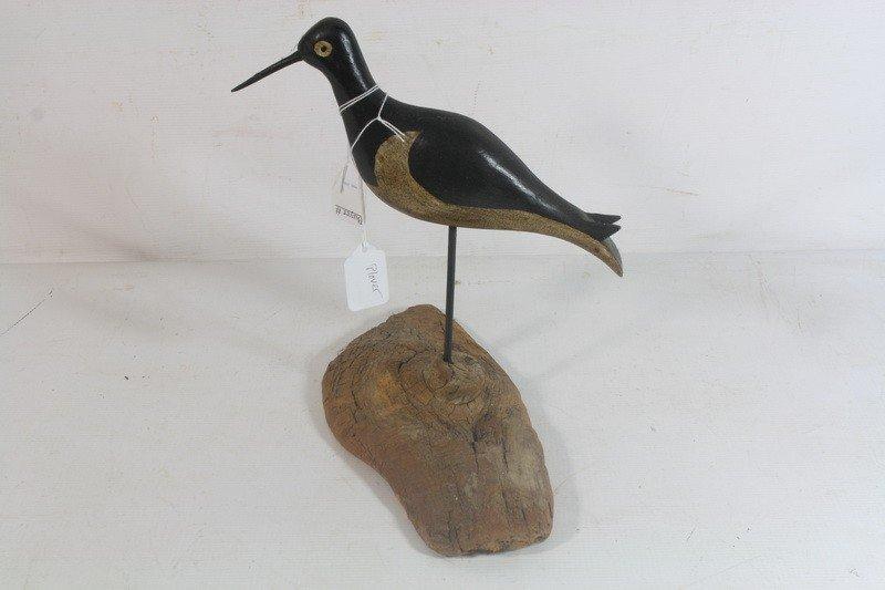 6: Plover Shore bird