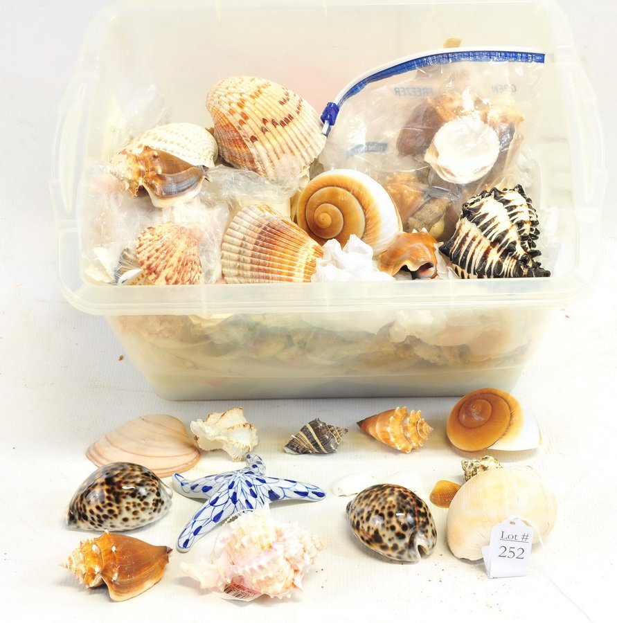 Estate Collection of Sea Shells