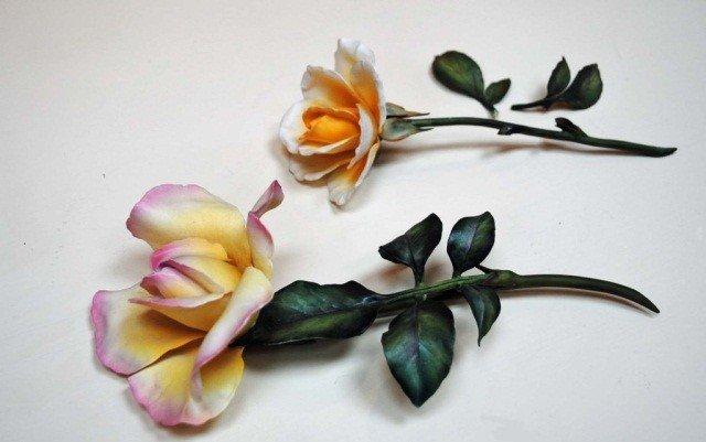 13: 2 Boehm Roses
