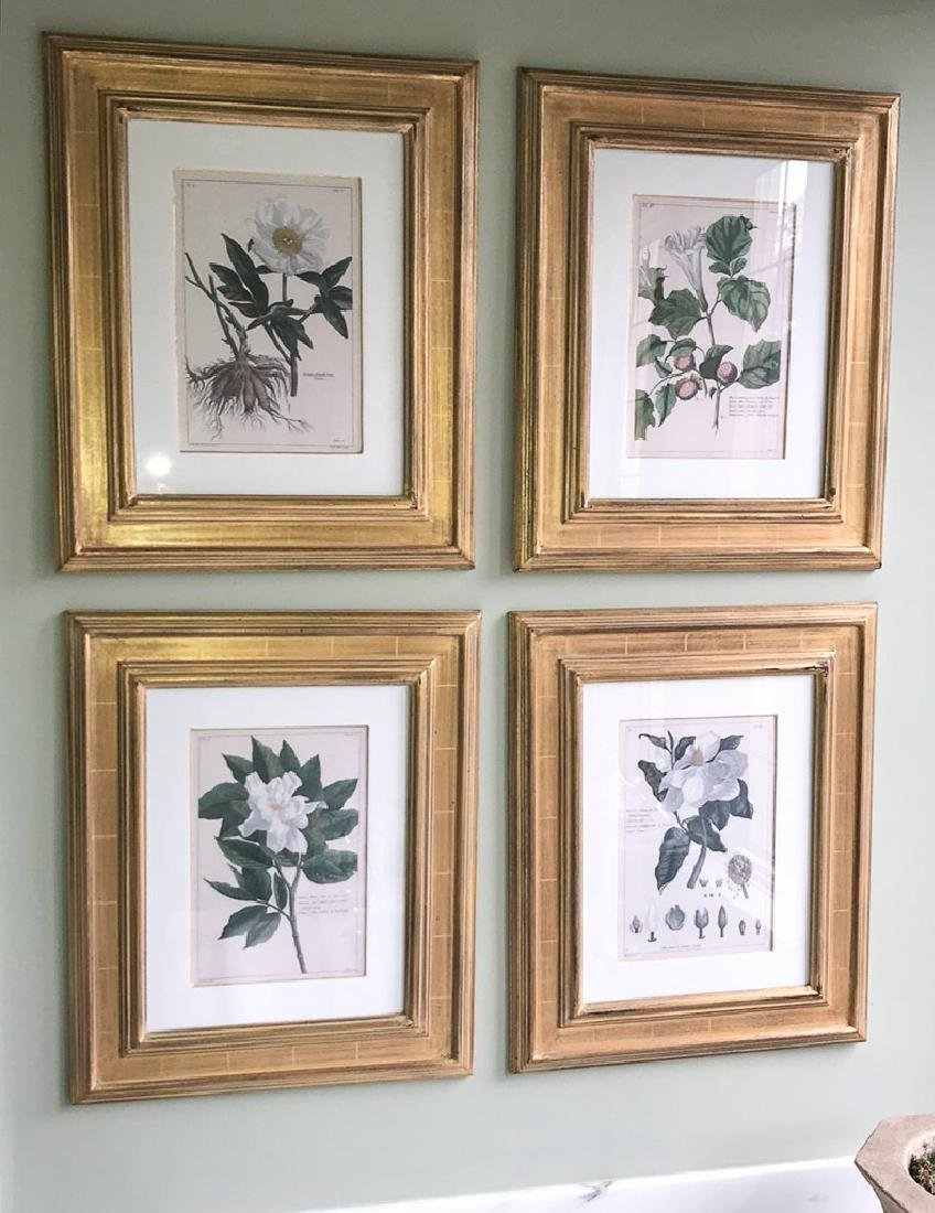 Nice Set Of 6 Italian Botanical Engravings