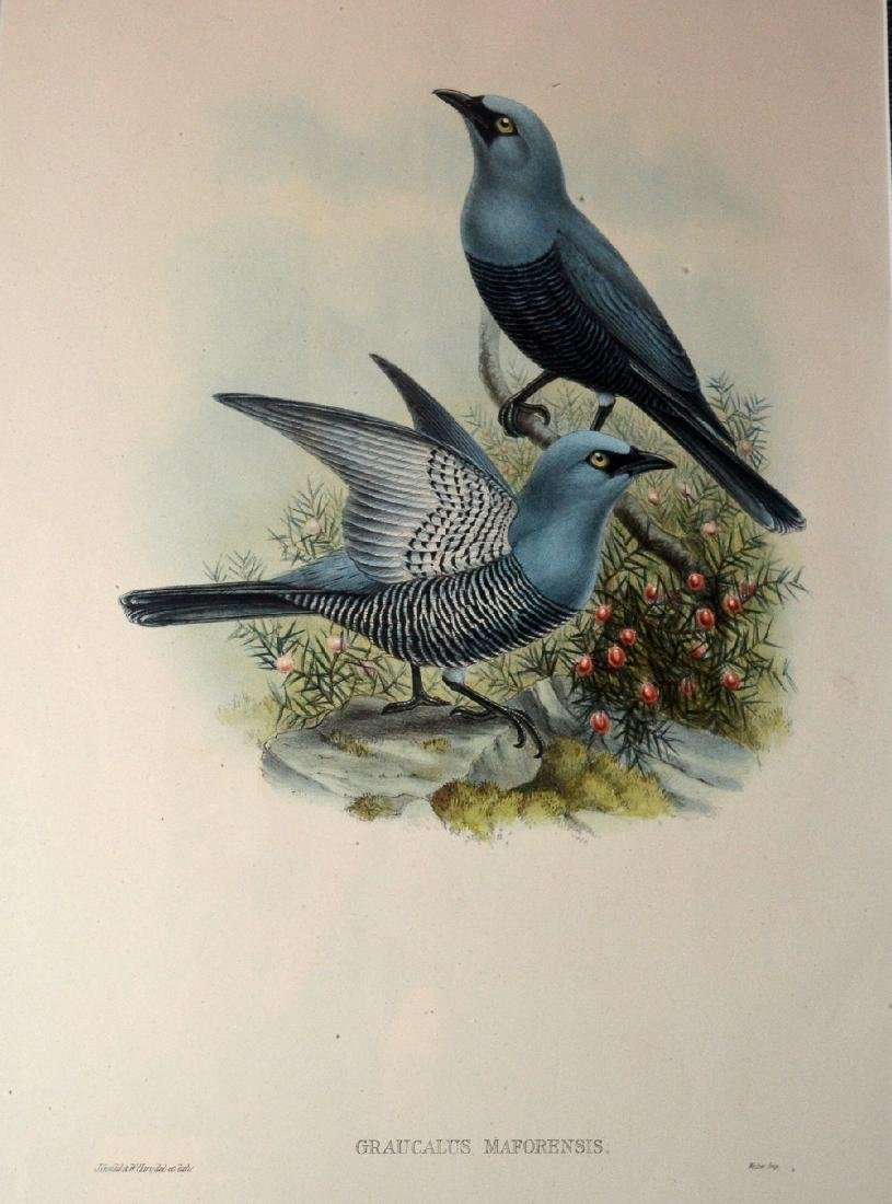 J Gould and W Hart The Birds of New Guinea - 2