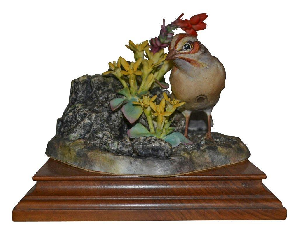 Dorothy Doughty, Lark Sparrow