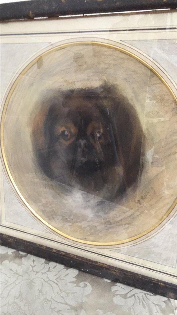 Pr Parisian Framed Charcoal Spaniel Portraits, - 2