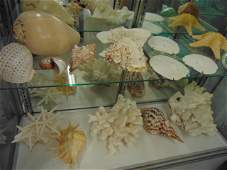 Coral, sea shell & sand dollar collection