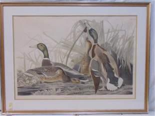 "Audubon print, ""Mallard Duck"", drawn from Nature by"