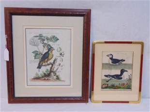 """2 bird prints, Falcon, hand colored etching, 13"""" by 10"""""""