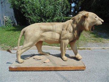 Full size mounted Lion