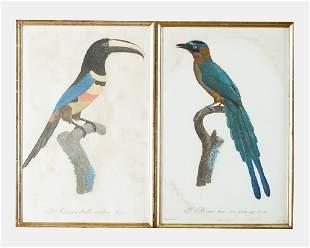 Jacques Barraband 1767 1809