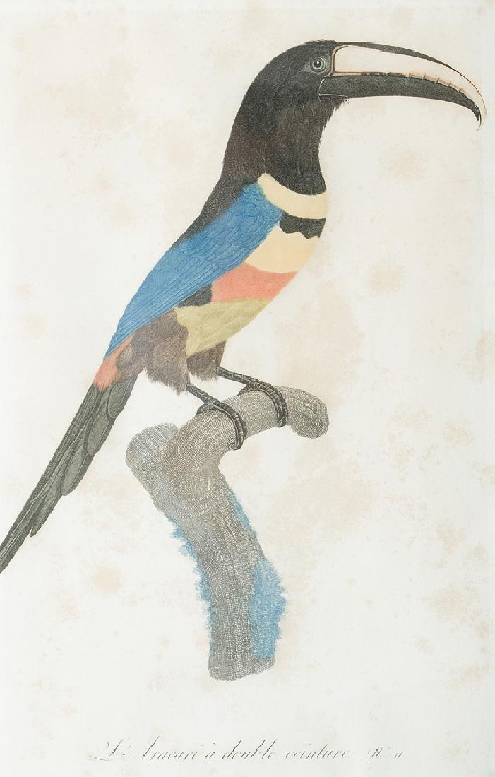 Jacques Barraband (1767- 1809) - 2