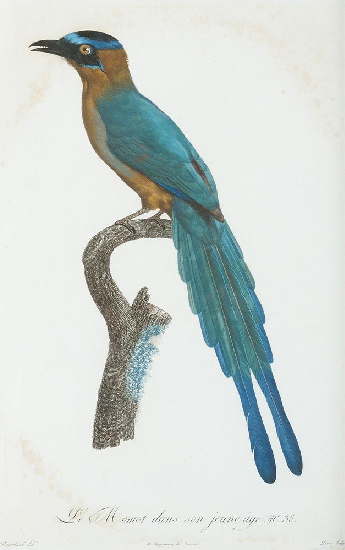 Jacques Barraband (1767- 1809) - 3