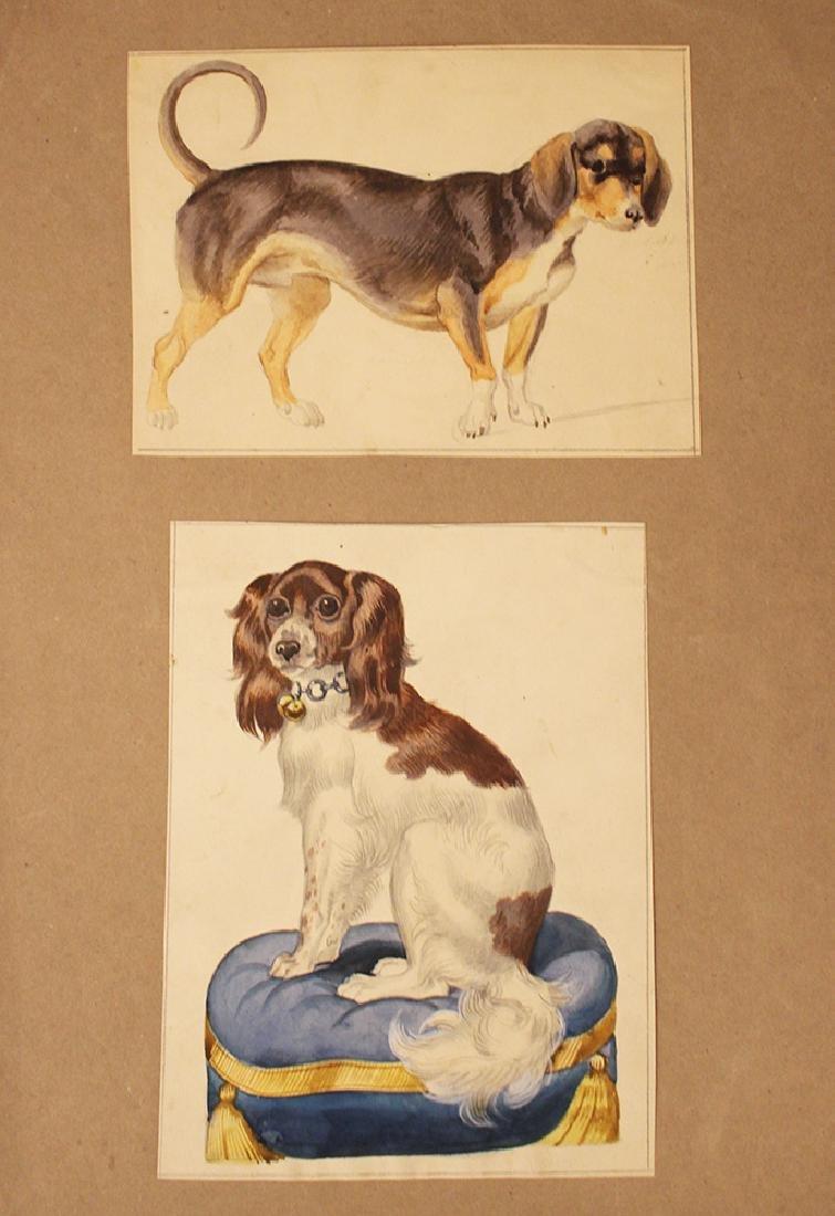 Dog Studies