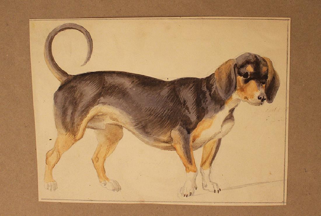 Dog Studies - 2