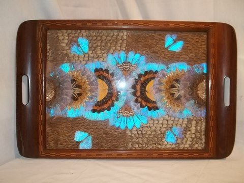 190: Amazing Old Butterfly Wing Tray