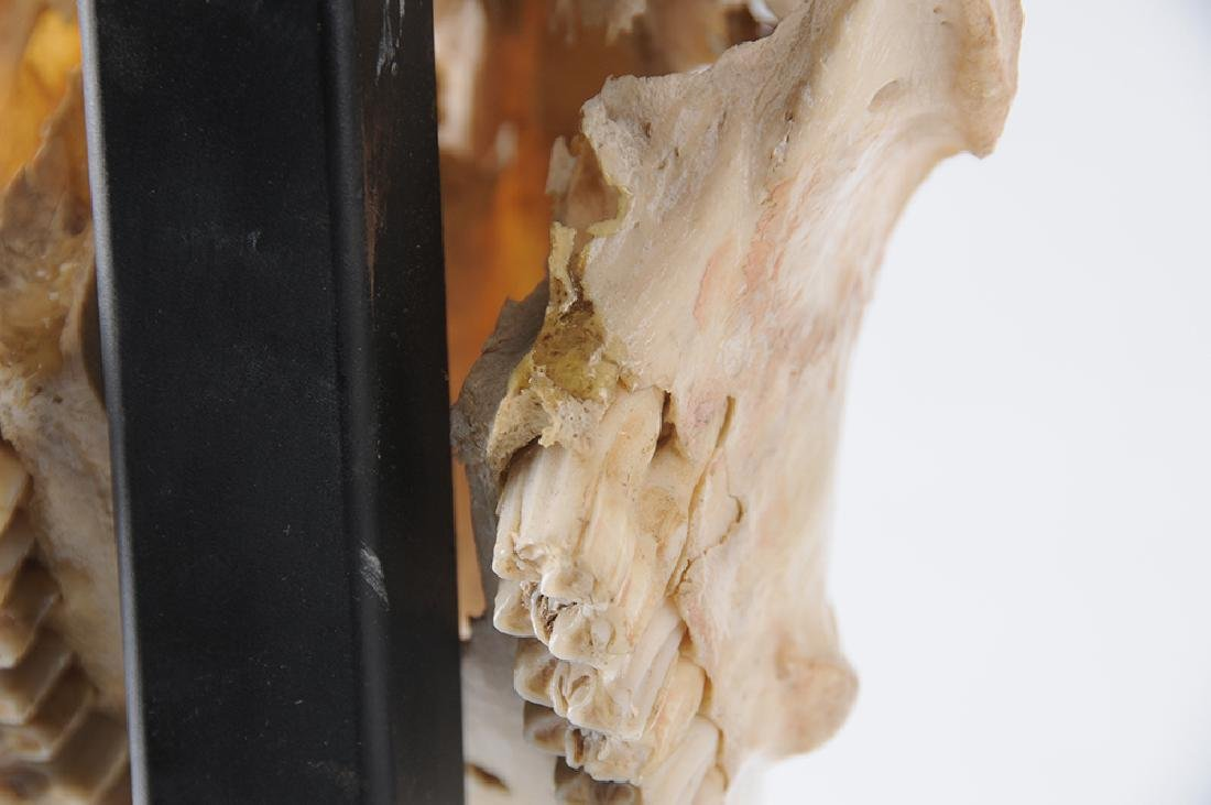 """ANTHONY REDMILE:  """"SILVERED METAL MOUNTED IBEX SKULL"""" - 4"""