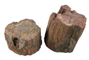 TWO FOSSILIZED WOOD FRAGMENTS