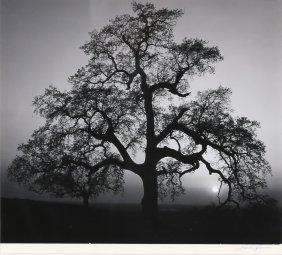 "Ansel Adams: ""oak Tree, Sunset"""