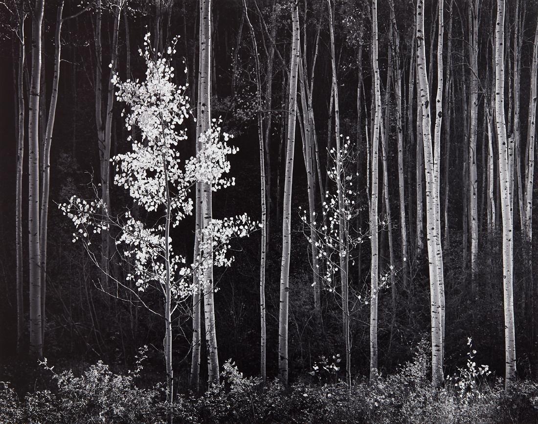 Ansel Adams (American 1902 - 1984)