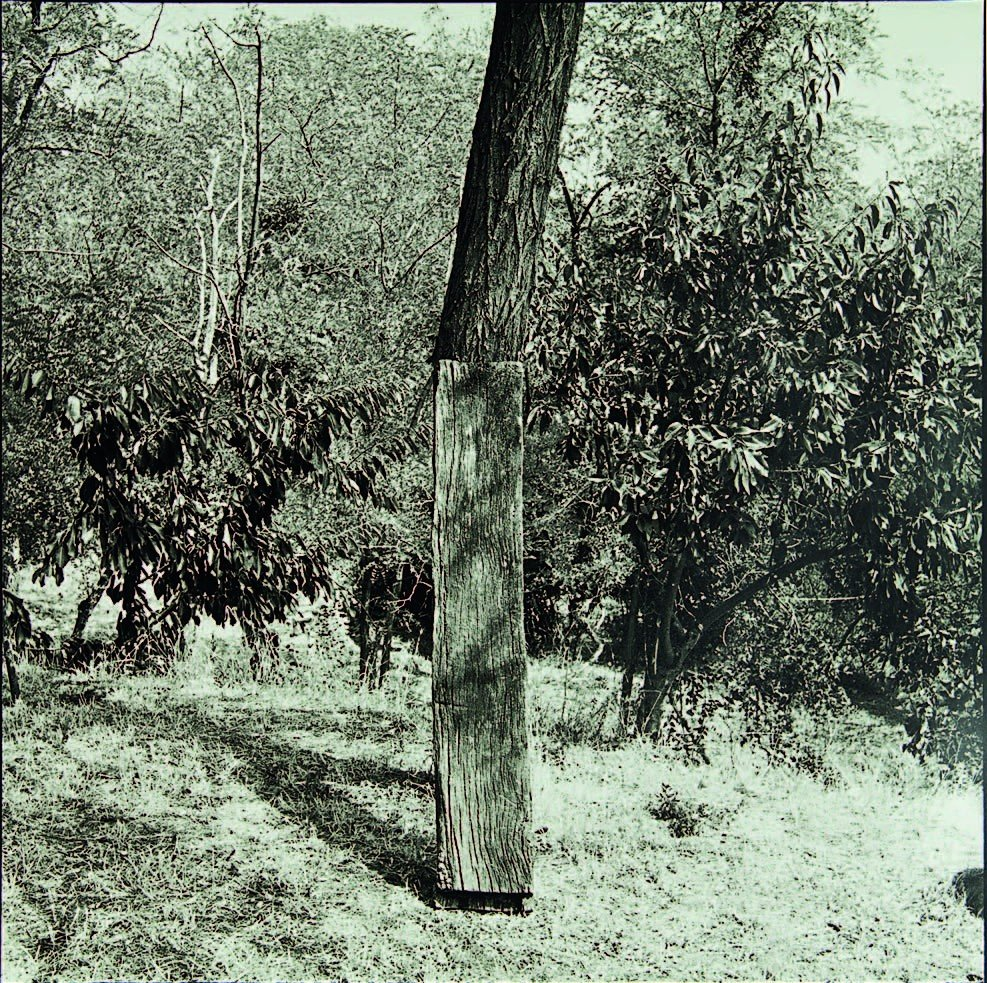 37: Bill Culbert, Tree with Plank, I