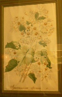 8: Early 19thC, Artist Unknown (possibly French)