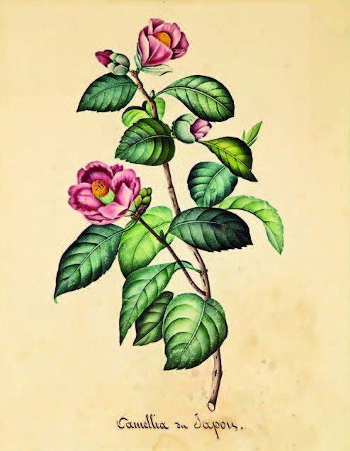 10: 19th century, Artist Unknown (Oriental)
