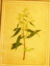 11: 19th century Chinese Artist Unknown