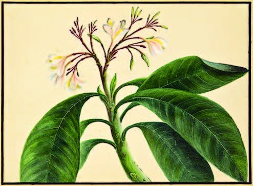 14: 19th century. Artist Unknown (S. Africa/Indian)