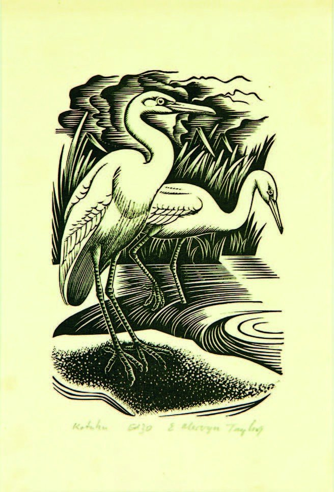 19: E. Mervyn Taylor, 'Kotuku'