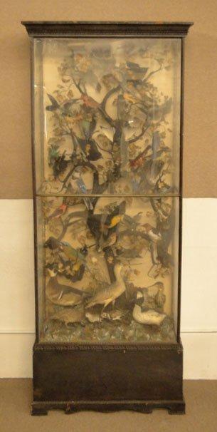 60: VICTORIAN TAXIDERMY BIRD VITRINE