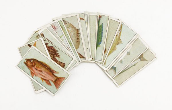 Fish of Australasia Pipe Tobacco Cards. Spotting, Wear