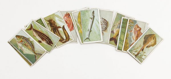 Twenty-Five (25) Fish of Australasia Pipe Tobacco Cards