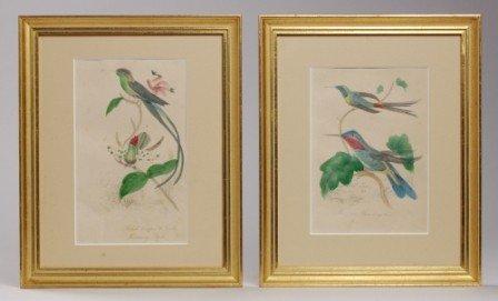 102: Pr. Hummingbird Colored Book Plate Prints