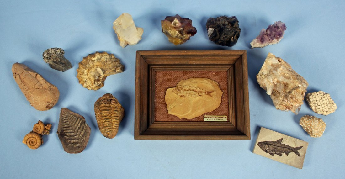 Collection of Fossils and Quartz