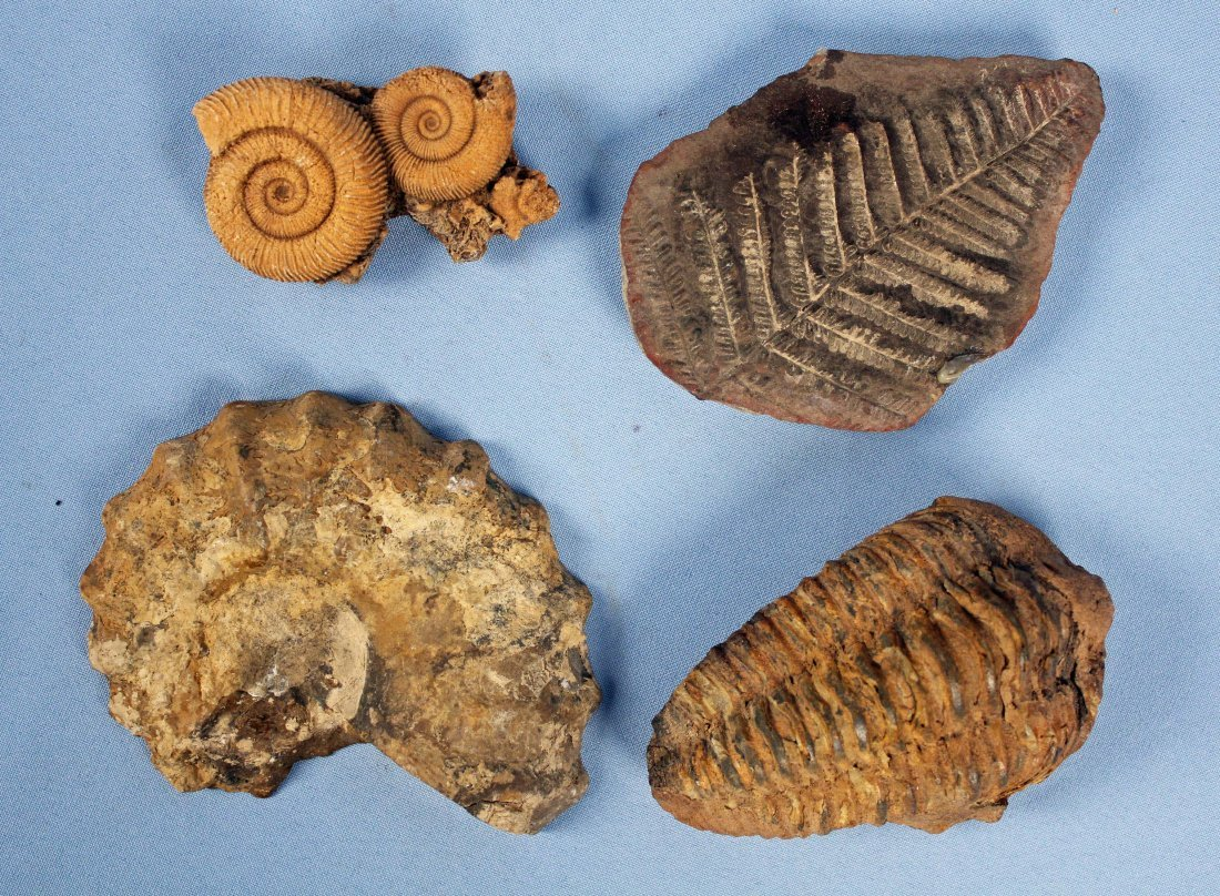 Collection of Fossils and Quartz - 4