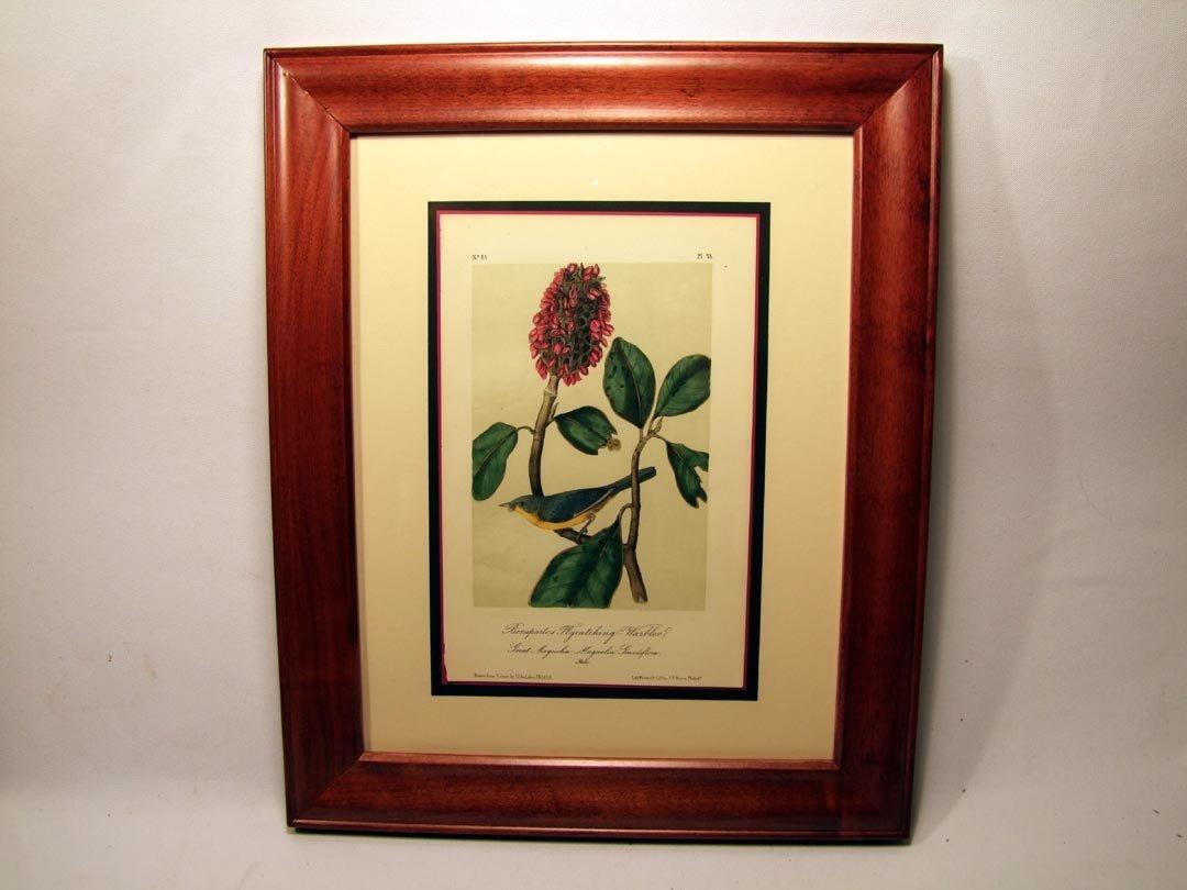 "87: Audubon ""Bonapartes Flycatching Warbler"" Print"