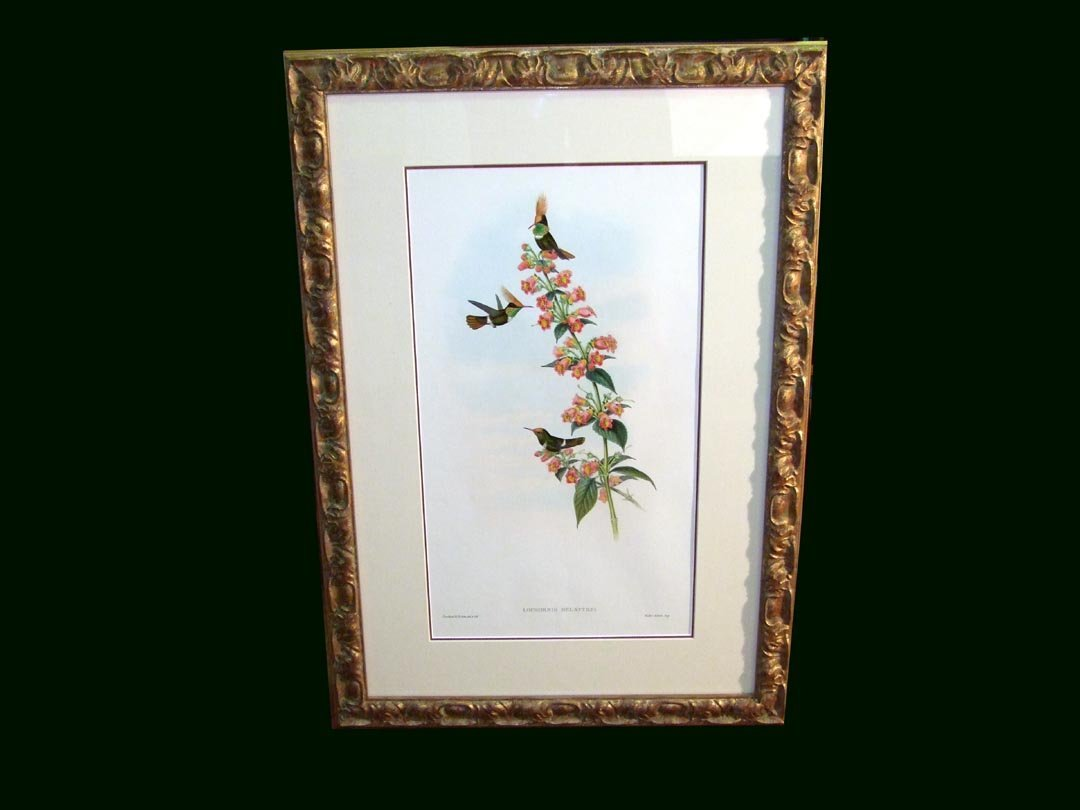 13: John Gould Hand-Colored Print OF Hummingbirds