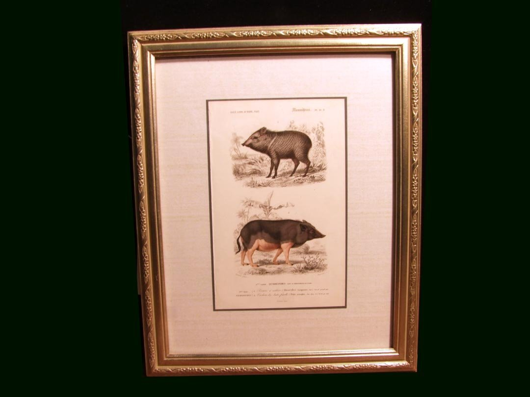112: Copper Engraving Of Wild And Domestic Pigs