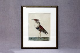 Hand Colored Bird Etching