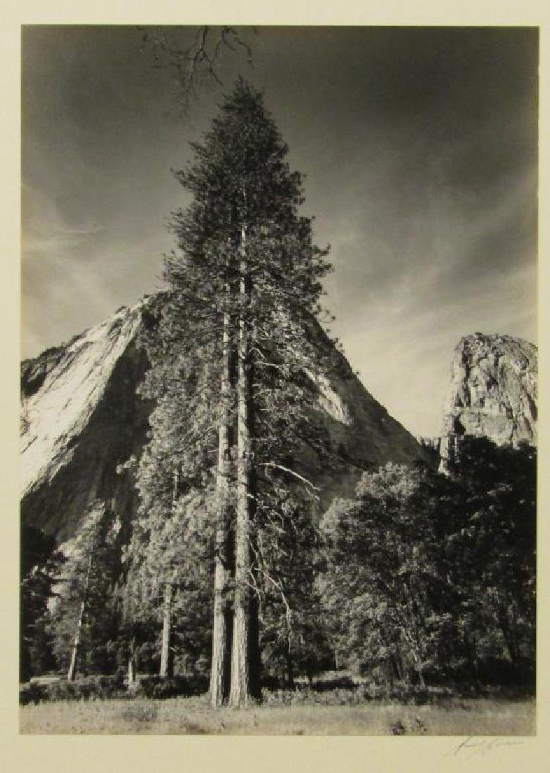 Ansel Adams (American, 1902-1984) - Photograph