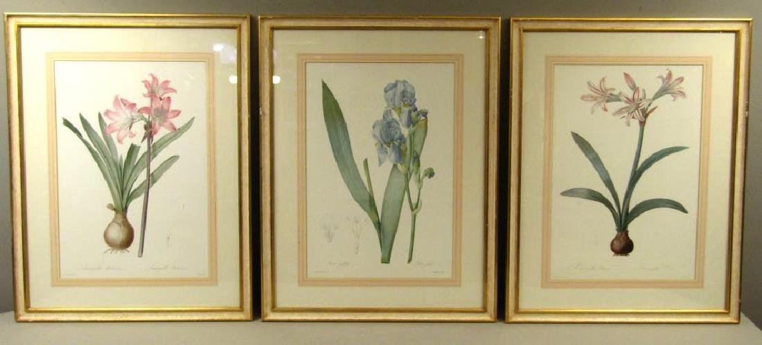 After Redoute - 3 Framed Floral Color Prints