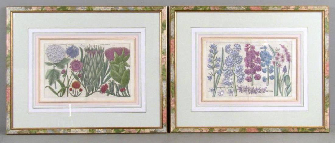 2 Hand Colored Botanical Prints