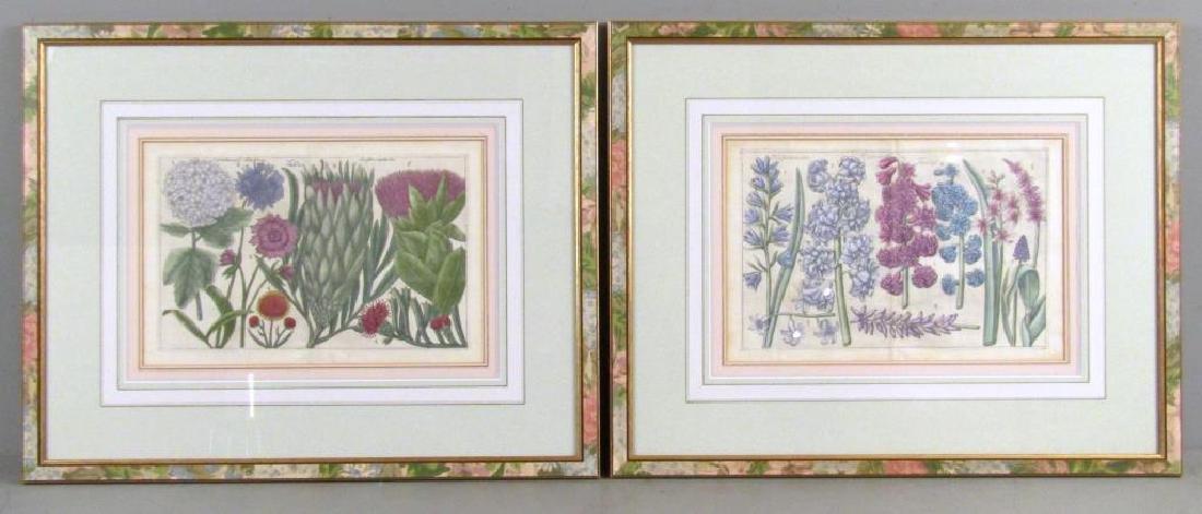 2 Hand Colored Botanical Prints