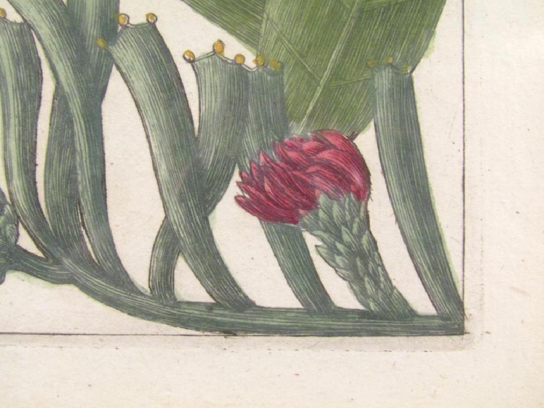 2 Hand Colored Botanical Prints - 3