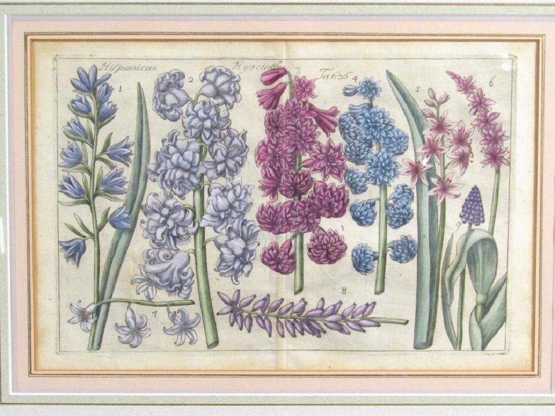 2 Hand Colored Botanical Prints - 4