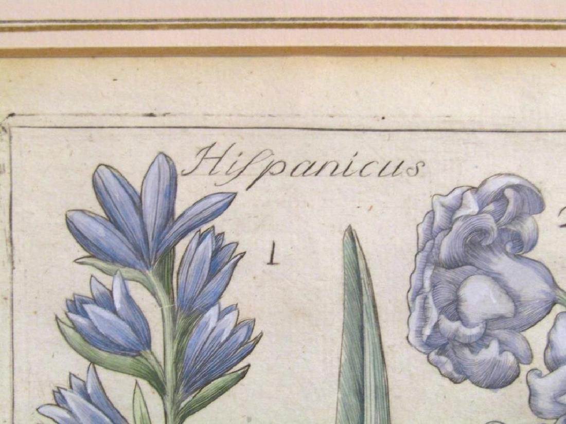 2 Hand Colored Botanical Prints - 5
