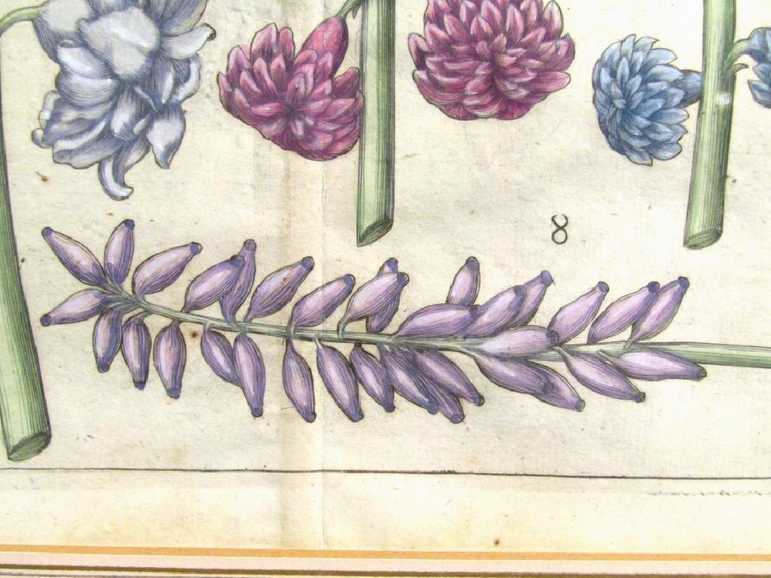 2 Hand Colored Botanical Prints - 6