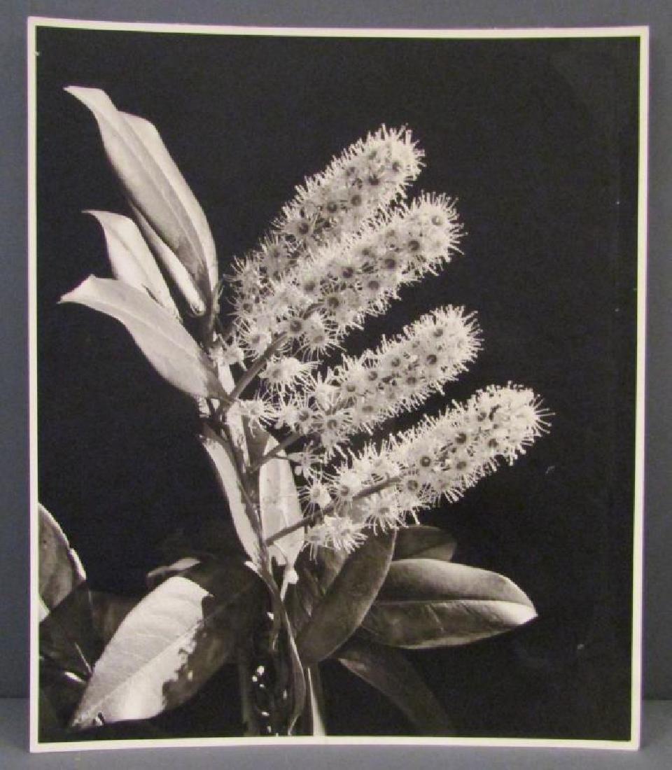Margaret Bourke-White - Silver Print