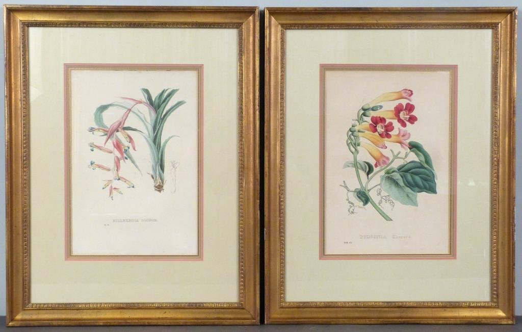 Pair Hand Colored Botanical Prints